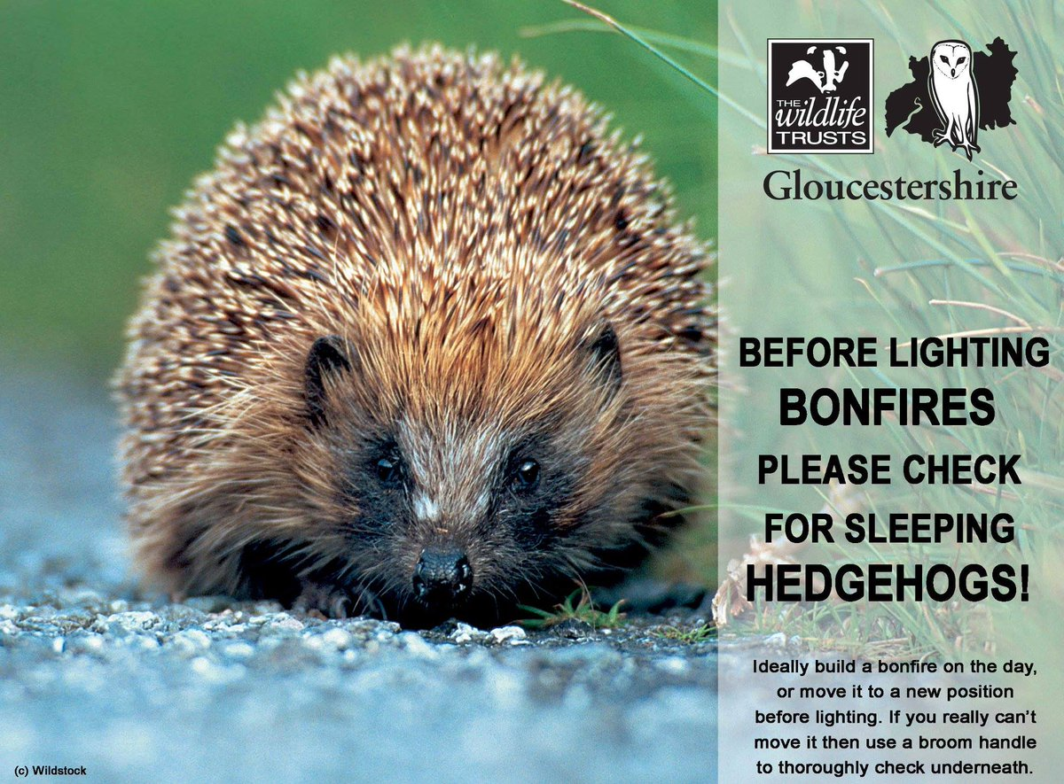 Bonfires can be attractive beds for hedgehogs, remember to  check them before lighting them please! https://t.co/Vx8uyZHNiz