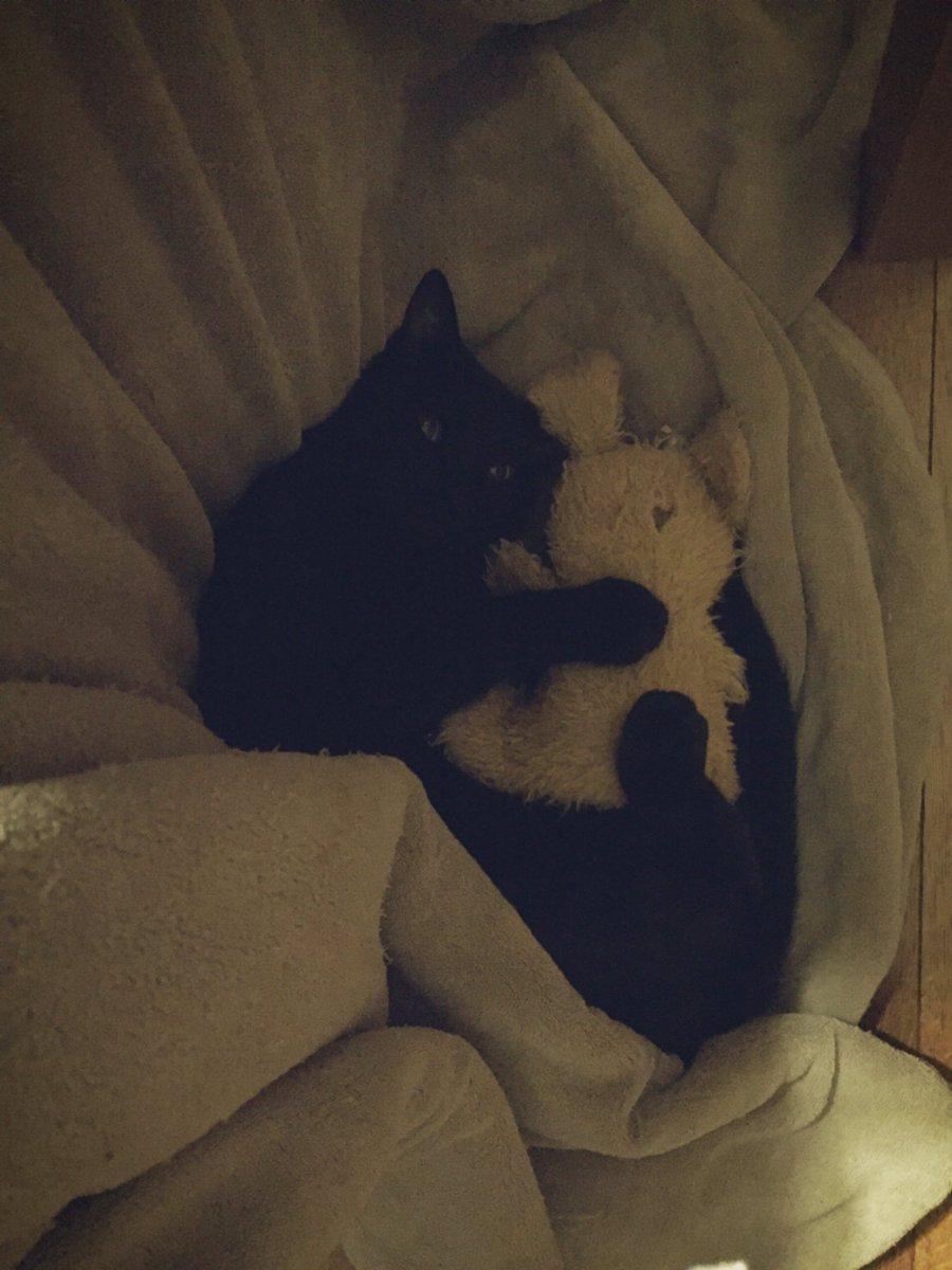 うちのネコ、僕が作業してて1人で寝なきゃいけないとき大体こうなんですけど可愛すぎません??