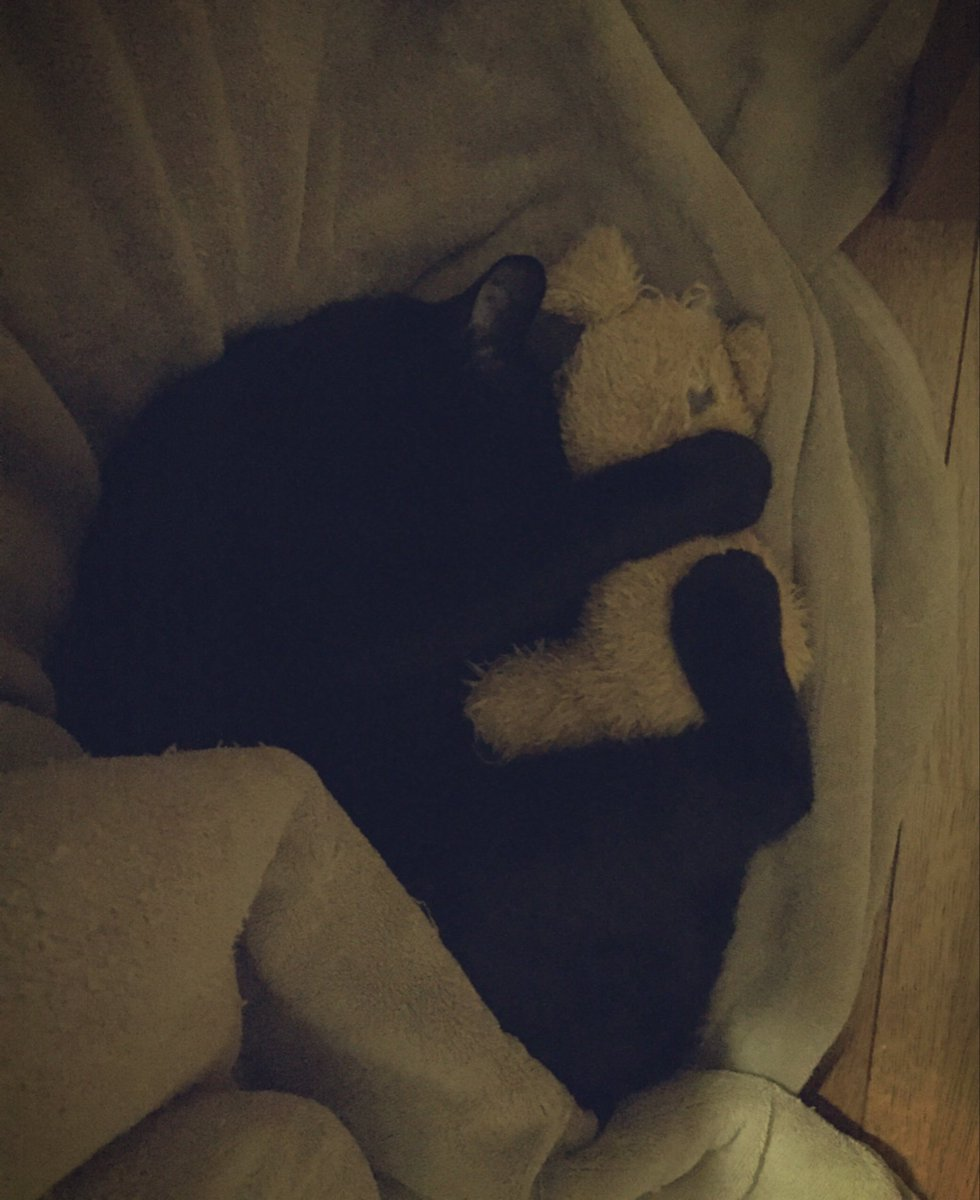 こんなの反則WWかわいすぎる黒猫WW一人で寝れれないのかなW