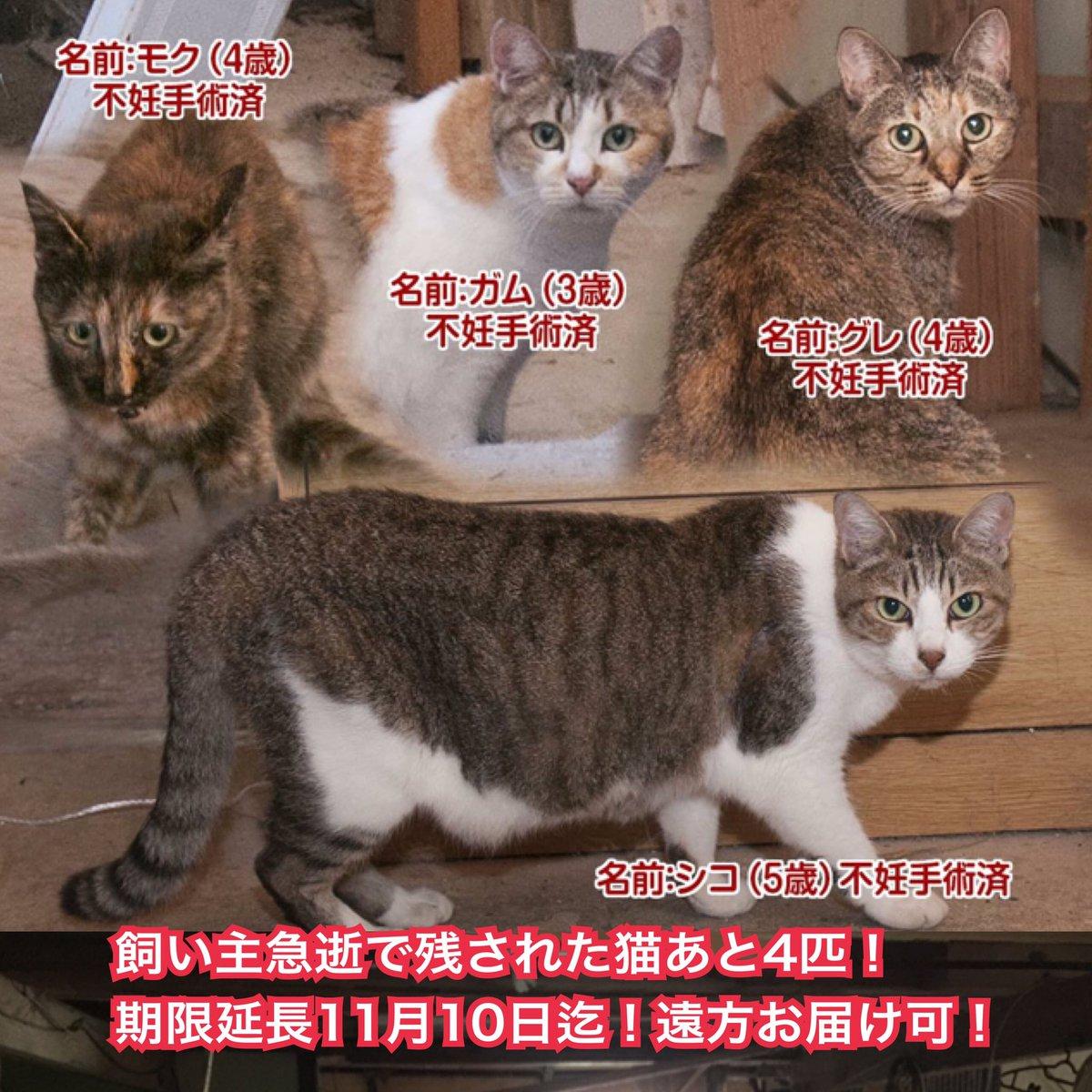 【拡散希望】島根県より飼い主急逝で残された猫4匹の飼い主さん募集!期限11月10日迄!関西、関東でもお届けします!詳細お問合せ下さい! https://t.co/6qQ102GWb1