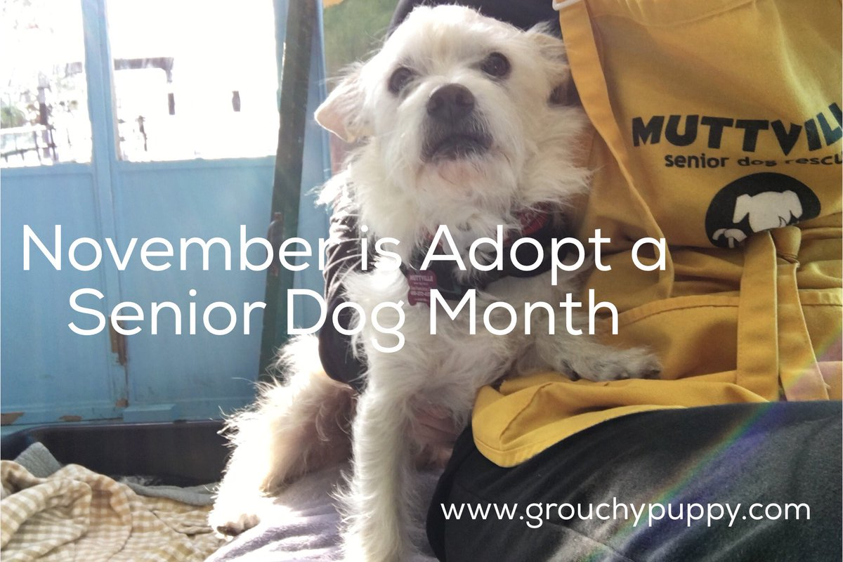 Discover how an older dog enriches your life. #AdoptASeniorDog https://t.co/sc86A0dX8A