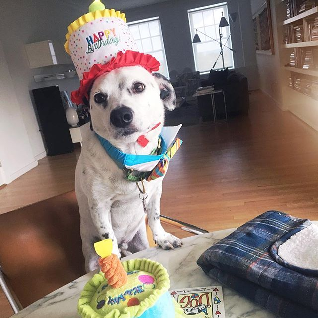 Do I Smell Birthday Cake Happy Melvinpictwitter BwmY66gq9m