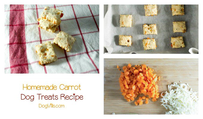 Fido will love these yummy carrot treats! Check out the easy here:
