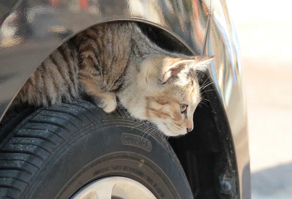 猫バンバン 冬 車