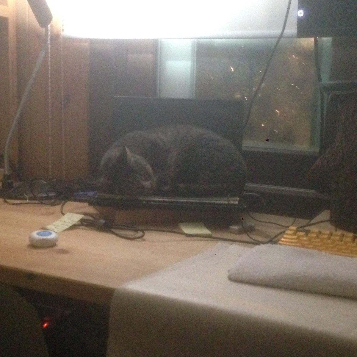 길냥이가 창문을 통해 들어와 노트북위에서 잠들어버렸다. 노트북키를 누르고 있어 작업을 할 수 없다. 일을 멈추고 길냥이를 바라본다. https://t.co/Fw6aW3eW4N