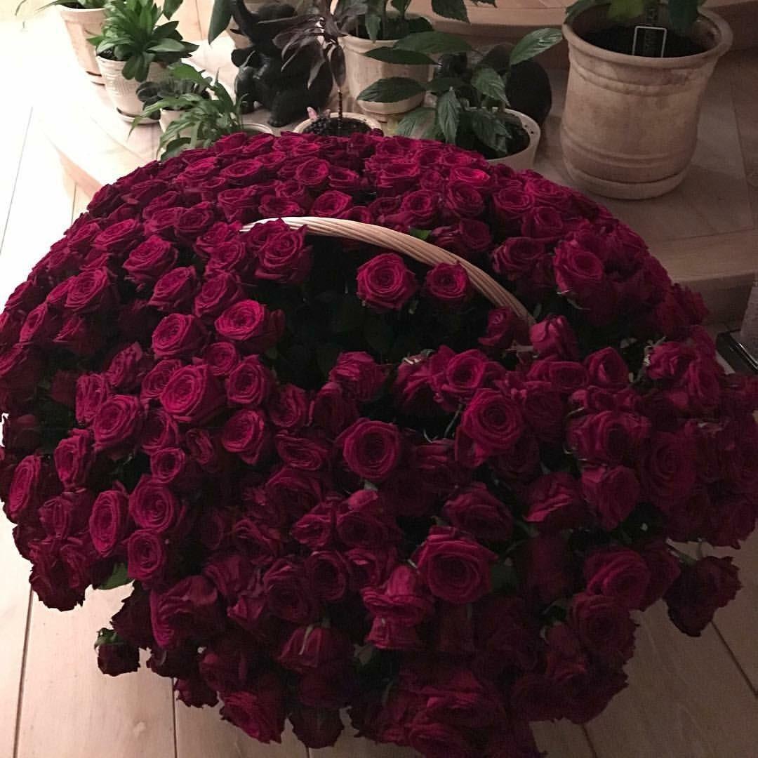 заранее расписание миллион алых роз цветы фото чакра