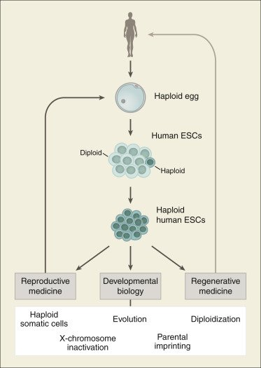 Cell Stem Cell on Twitter: