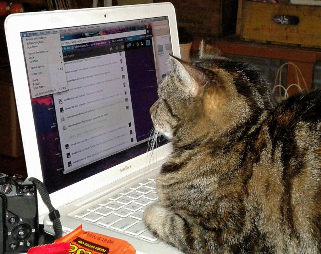 Tango has taken over the laptop again...