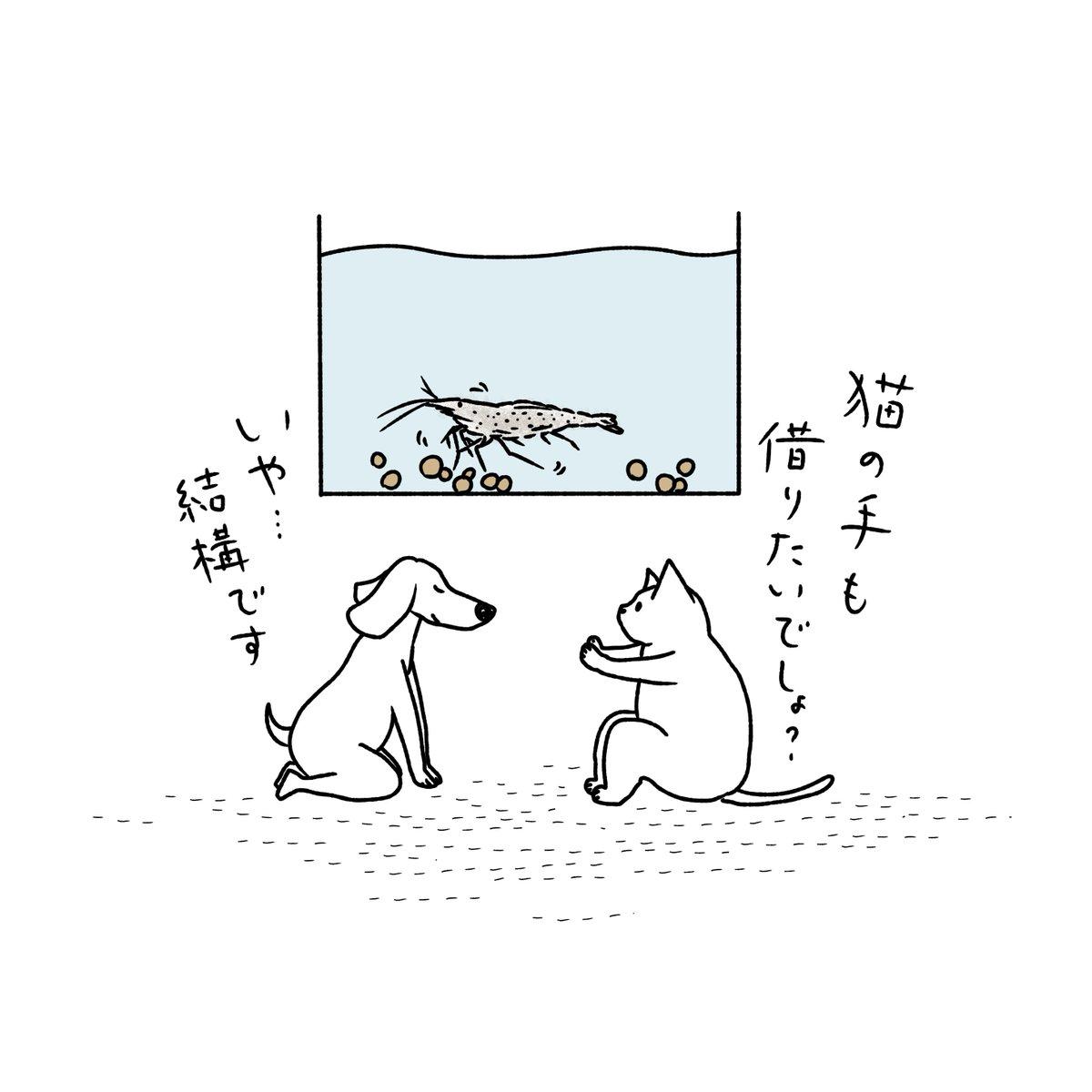 石川ともこ On Twitter 水槽のエビが沢山の手でずっとコケ掃除をしてい