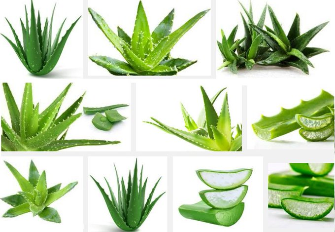 Health Benefits of Aloe Vera healthtips beautysecrets skincare
