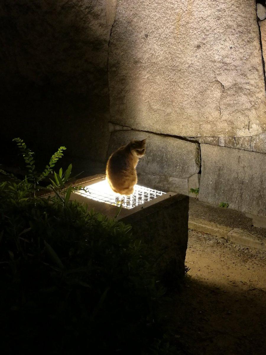 大阪城でライトアップされるニャンコ https://t.co/Ti20MEuQMy
