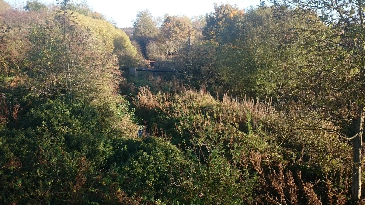 I love changing at #Inverkeithing #station &amp; looking down on this #wildlife haven :-) #goldfinches 2day #Scotland #ScotlandbyRail @ScotRail<br>http://pic.twitter.com/ymhjNpvOLB