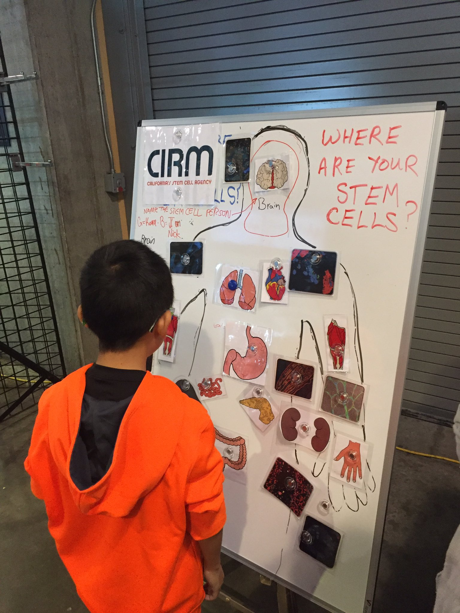 Having fun teaching kids about #stemcells at @bayareascience #DiscoveryDay! @CIRMnews #STEMed https://t.co/IgNyl91fiV