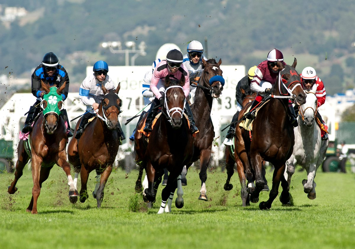 Golden Gate Fields Photo Finishes likewise Pegasus World Cup besides Golden Gate Fields Adventure Saturday November 14th 2015 as well Racing Finish Line in addition . on golden gate fields turf club