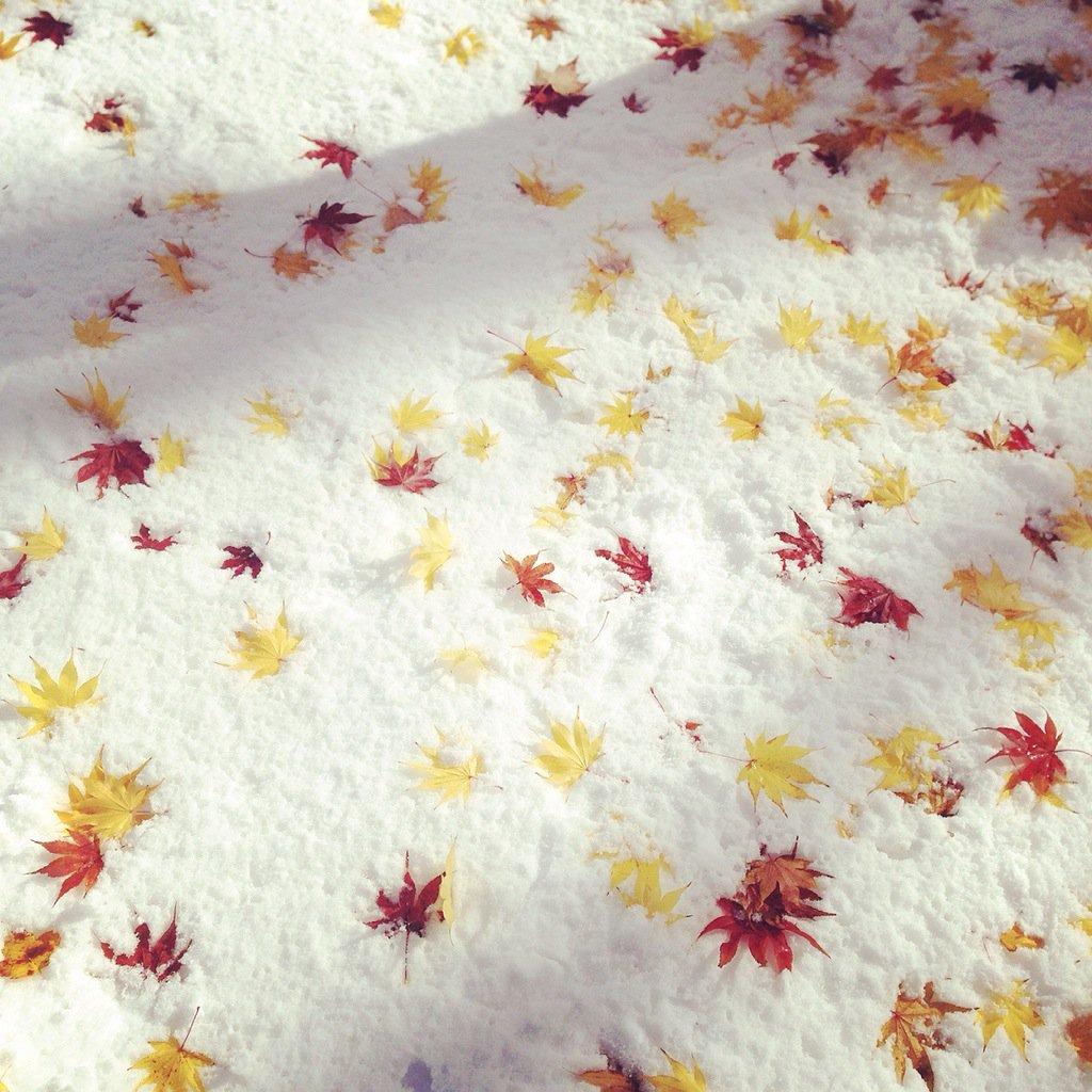 冬が早過ぎて紅葉が散るから和菓子みたい?珍しい