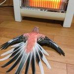 インコの日課WWストーブで暖をとるのって普通なのWW