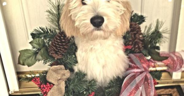 http://www. dexdog.com  &nbsp;   check this out: Our Christmas Card... #goldendoodle #dogchristmascard  http:// ift.tt/2f6p1cf  &nbsp;   #dogs…<br>http://pic.twitter.com/FWMcpaeq6o