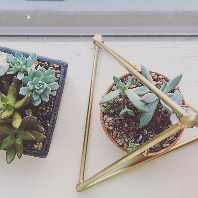 Crafting with straws. Check it out on the blog: diy succulents homedecor