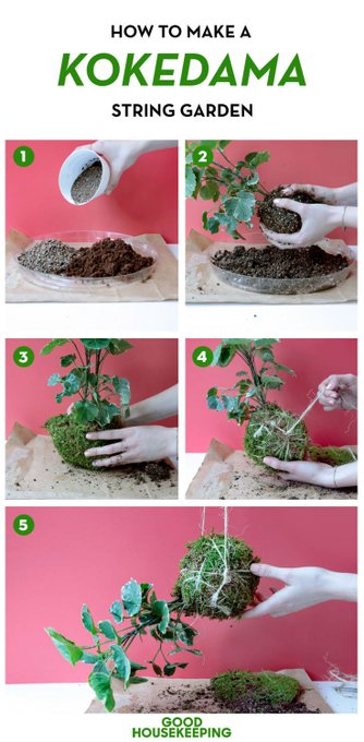Bonsai DIY-Projects Moss-Ball interior Kokedama, which literally means ...
