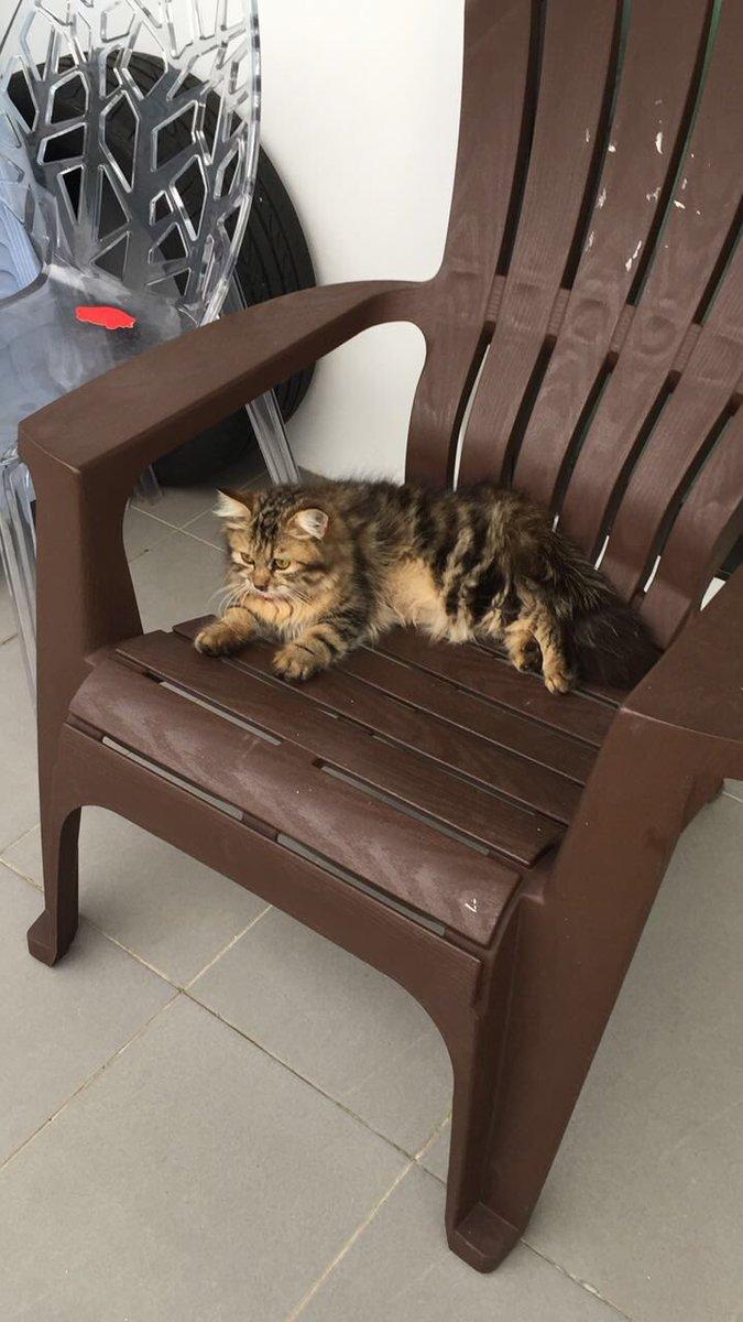 Siapa nak kucing comel gila nak mati ni? Dm me asap. Please help rt @nishxnish @MinaTheTerrible https://t.co/gIHdUrDki2