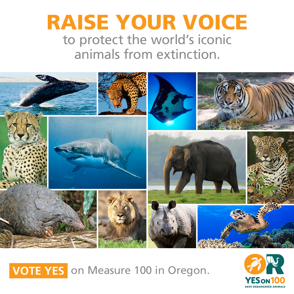 protect endangered animals Connect with the rainforest site gray wolves were first put on the endangered species list in 1974 after they were protect african animals from poachers.