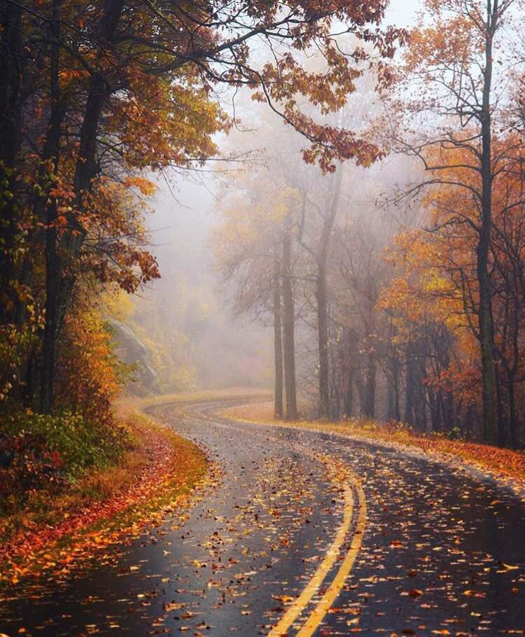 Take a drive in an autumn paradise @ShenandoahNPS by Alex Martin #Virginia 🍁🍂
