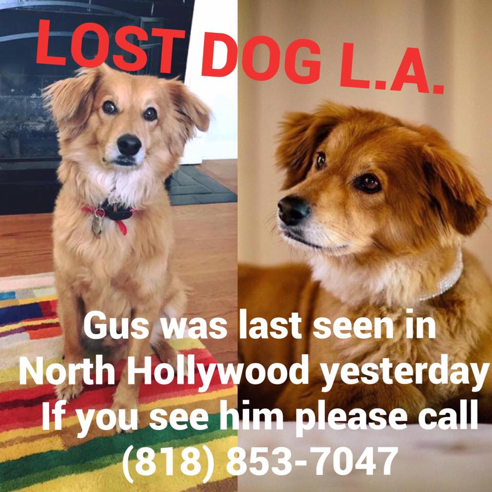 This #SFV pup from #NorthHollywood #NoHo is still missing... Keep your eyes open if you're in the area! PLS RT https://t.co/Vv3QazBswb