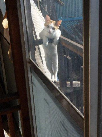 ねぇ~何してるの? https://t.co/k7XMhmtwO1 #cat #猫 #写真 #ちょっぱーないん https://t.co/KH8Kf2Hsq4