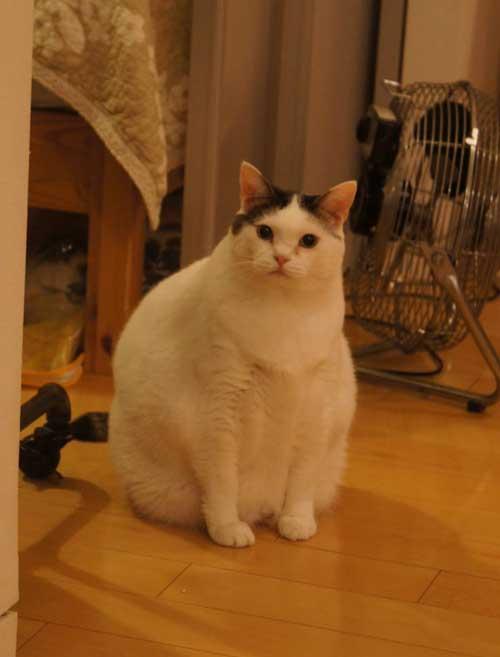 映画にはスター猫さんたちしかでれないんにゃ…… #ねこあつめ #cat #neko https://t.co/Zsw6umIaCV