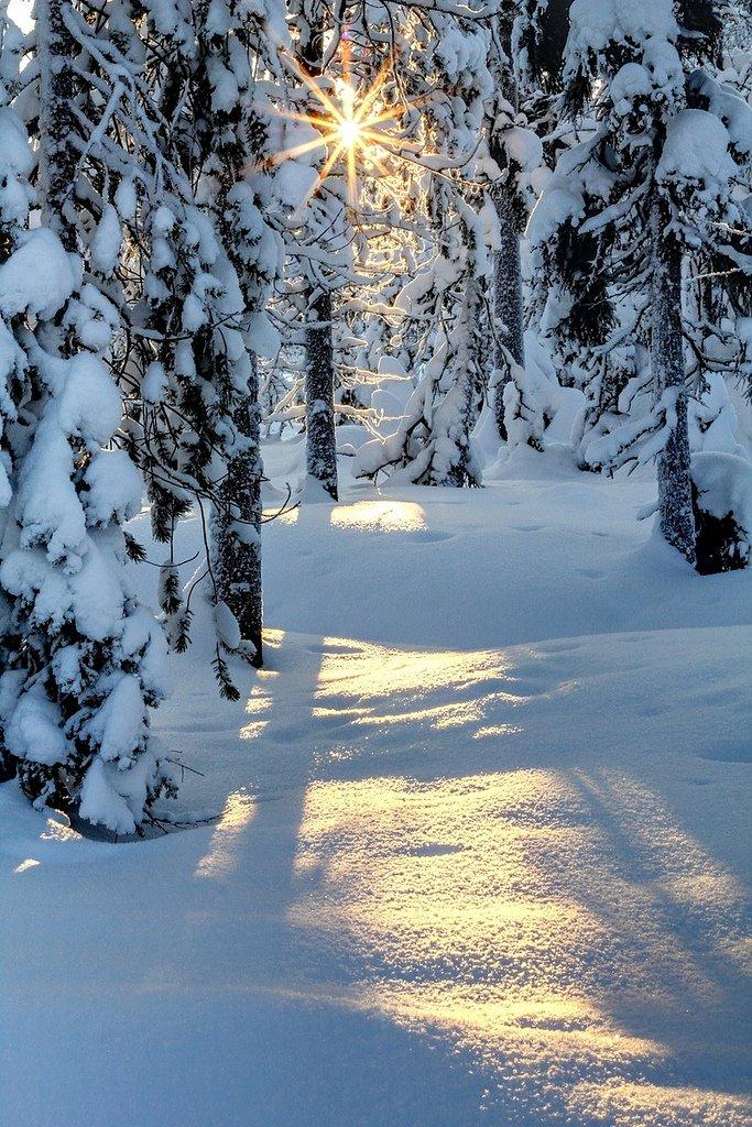 Зимний лес анимашки, днем рождения мужчине