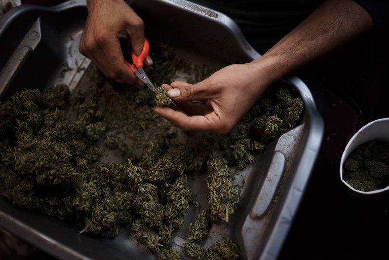 Фильм про продажу марихуаны конопля прикольные фото