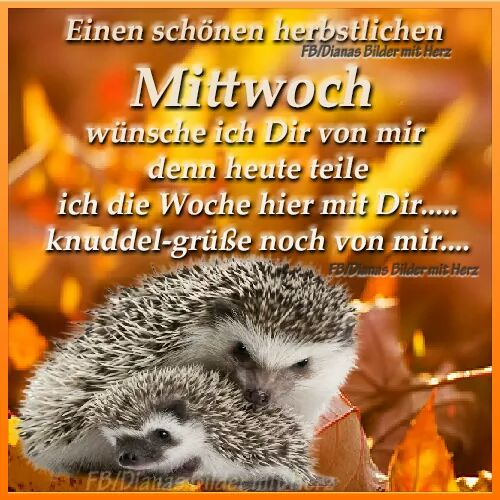Antje Ozorowski على تويتر Guten Morgen Welt