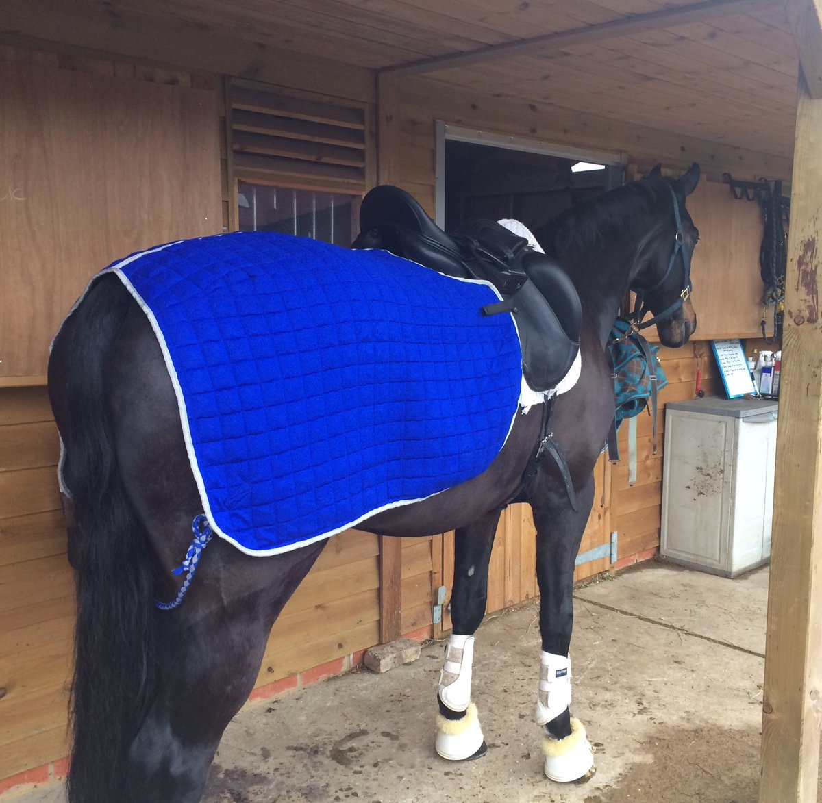 Tania Grantham On Twitter Sam In His Lovely New Thermatex Rug Specially Made To Fit My Monoflap Amerigo From Prosaddles Colours