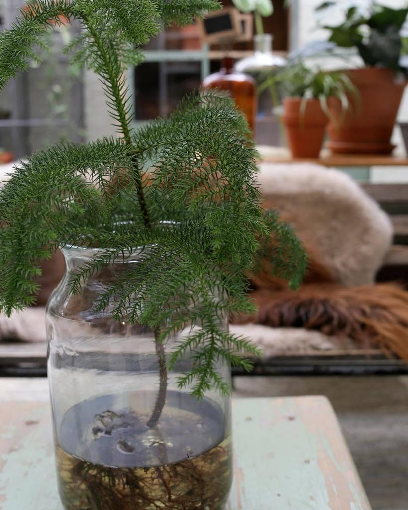 Plant In Glazen Pot.Loods 5 On Twitter Plaats Een Plant Met Afgespoelde