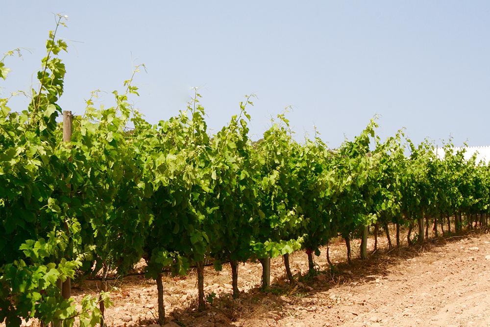 #Formentera tiene mucho más que playas. ¿Os apetecería descubrirlo? 😎 ➡️ http://bit.ly/webformentera