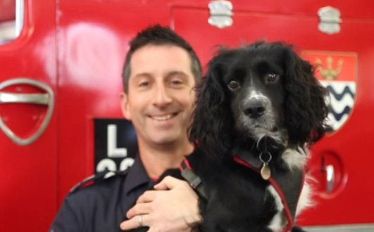 #LoveYourPetDay - meet Sherlock, not technically a pet but a specially trained fire investigation dog. He can identify a variety of ignitable substances to assist with criminal investigations & help determine whether a fire has been started deliberately https://t.co/iaUQjsPIZI