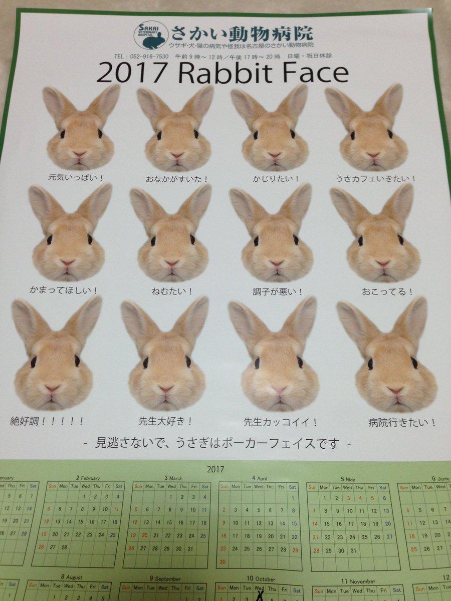 動物病院でもらった来年のカレンダーが斜め上のデザインでウチのウサギも動揺してる。 院長先生のウサギ愛溢れすぎ。 うさぎ ウサギ うさぎ好きさんと繋がり