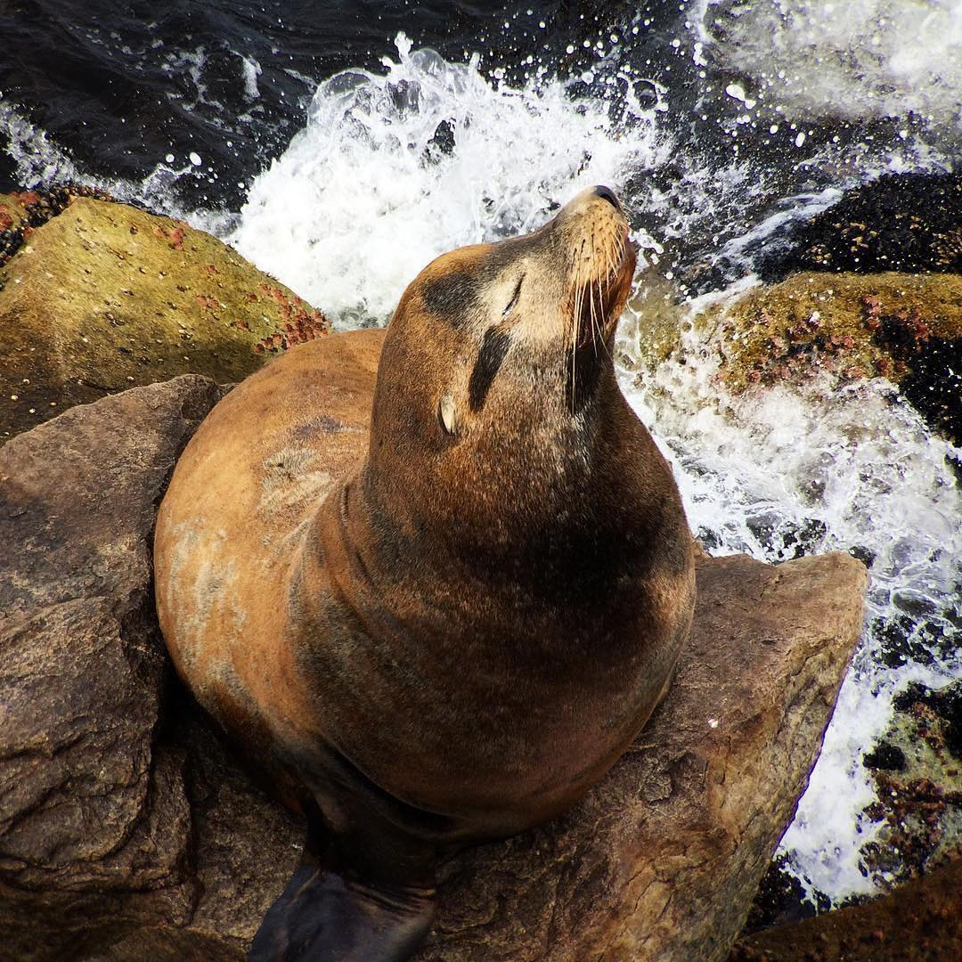 Monterey Bay Aquarium On Twitter Afternoon Sea Lion Break These