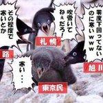 「寒い!」と騒ぐ東京都民を煽っていく北海道民の図!
