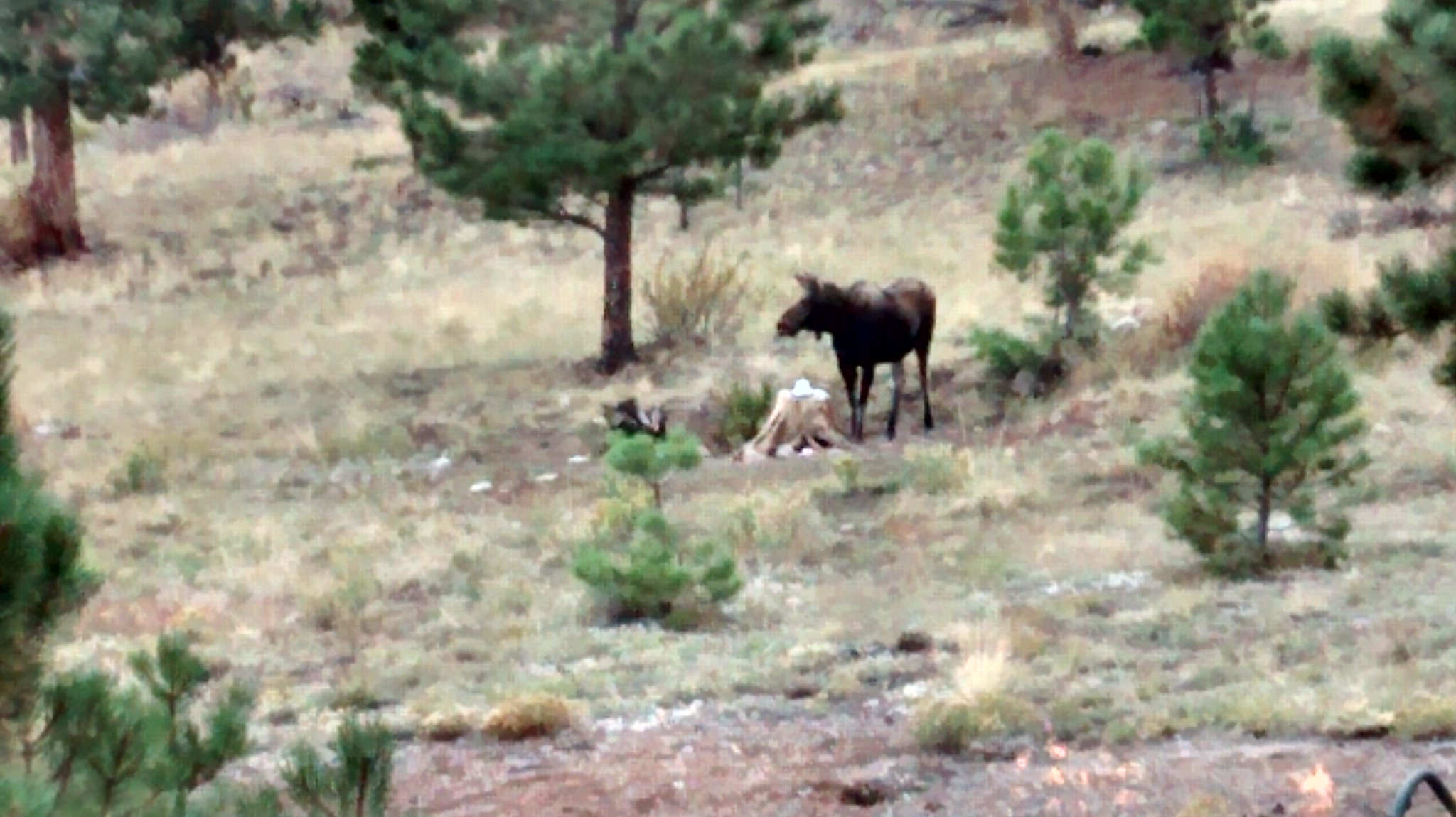 Dave Neal #chatsnap-ing from BV Co. Where never is heard a discouraging word. (Moose in my backyard.) https://t.co/8kz9L6byG3