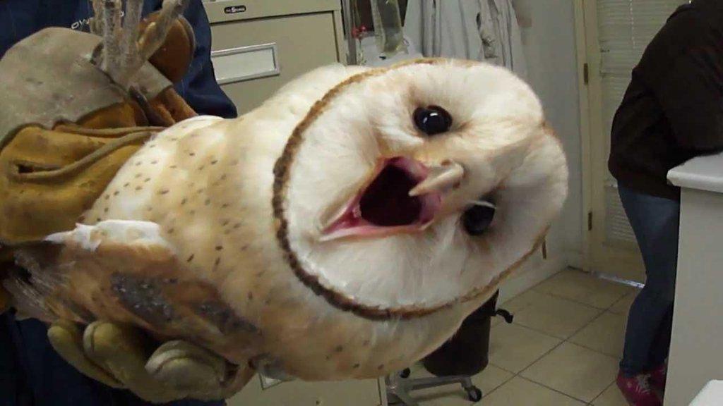 ʱ�정하는 ʰ�면올빼미 Worried Owl Twitter