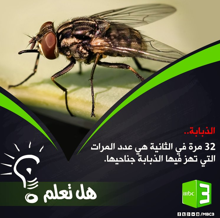 MBC3's tagged Tweets and Downloader | Twipu