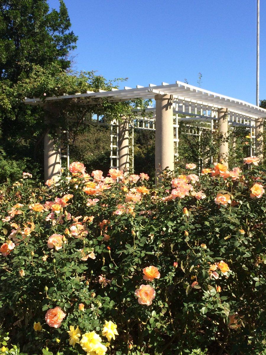 Huntington Rose Garden Cafe