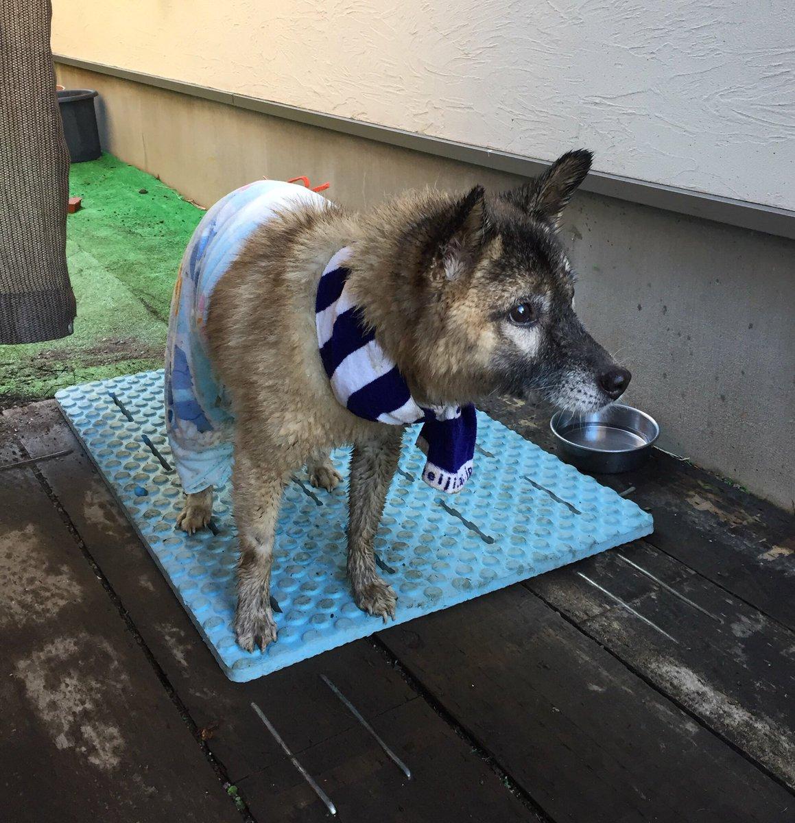 【朗報】 今、警察から連絡があり、この犬ちゃんの飼い主さんが見つかったそうです。良かった良かった! https://t.co/n0Ct1PS7NZ