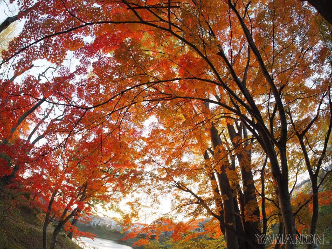 里の秋2016
