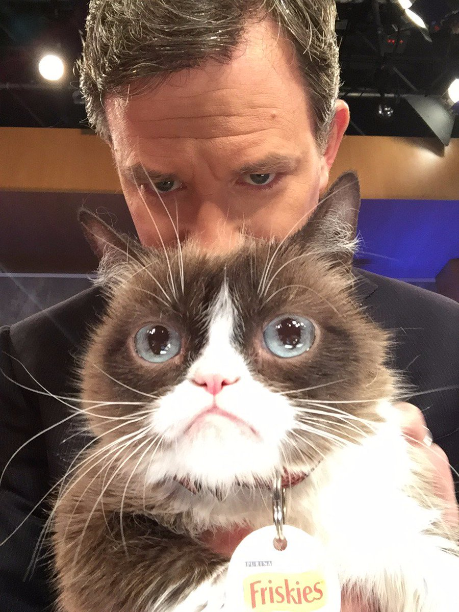 We have a special guest star on @GMA this morning: @RealGrumpyCat. https://t.co/0E9fNwEafH