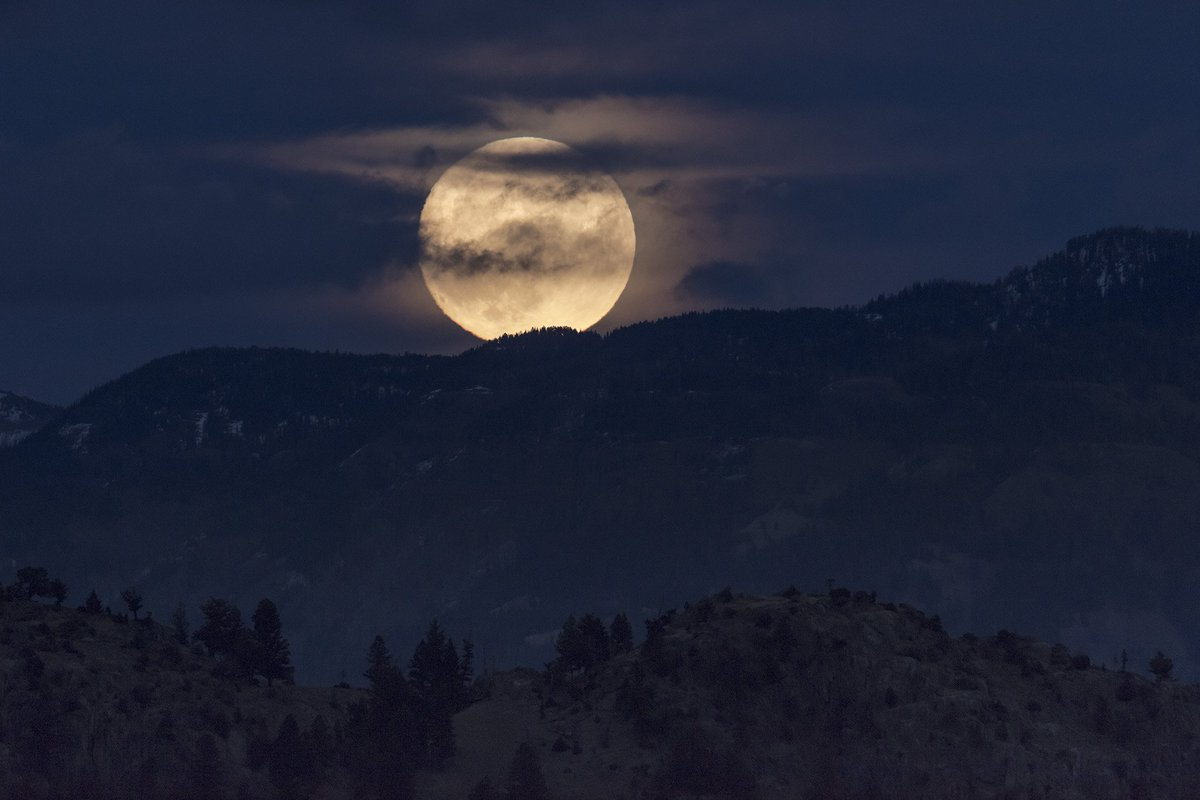 Coyotes don't always howl at the moon, but they did tonight! #Supermoon2016 #Supermoon https://t.co/ehHZgjCEOt