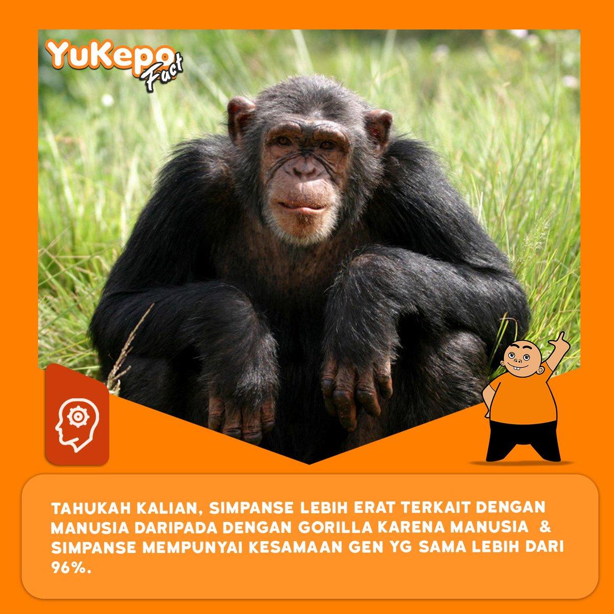 simpanse hashtag on twitter