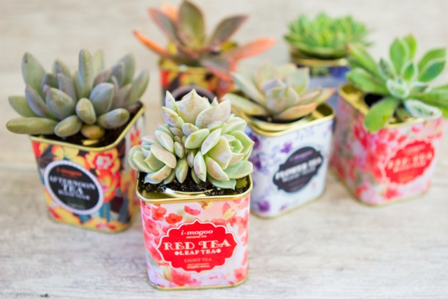 14 Creative Succulent Container Gardens to DIY