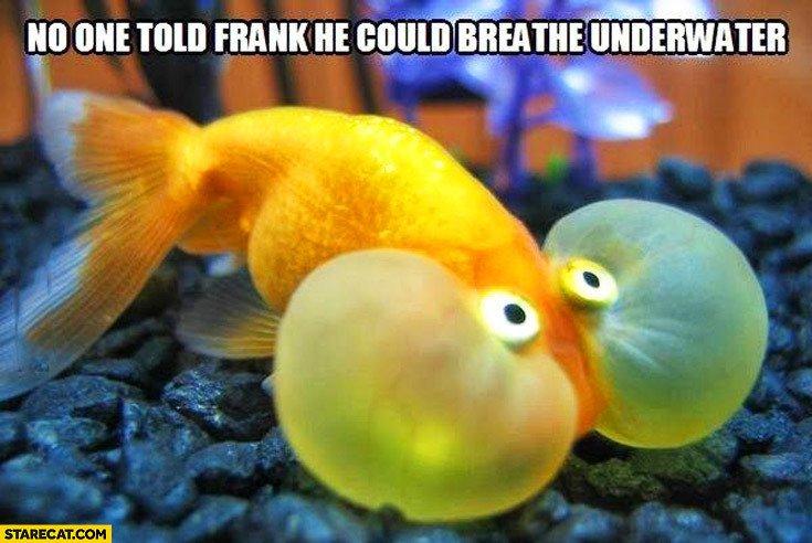 Starecat hashtag on twitter for How do fish breathe underwater
